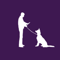 Koustav Basu, Professional Dog Trainer