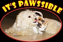Its Pawssible