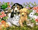 Your Pets Care