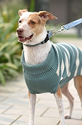 Mutt of Course Dog Sweater Emerald - Medium