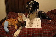Dogs Who Took Ultimate Revenge From Cats