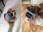 10 DOGS CAUGHT STEALING FROM TRASH, STILL ADORABLE!