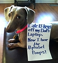 10 DOGS THE WORLD IS ASHAMED OF