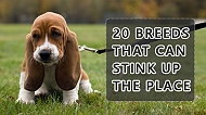 20 Breeds that can stink up the place