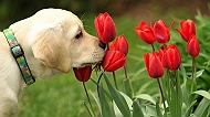 4 Common Allergies That Your Dog Might Have