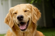 5 reasons you must smile at your dog often