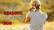 8 Good Reasons To Get A Dog