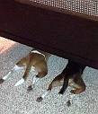 8 Dogs who are too dumb to play hide and seek