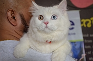 First ever Pet Fed�s Delhi Kitty Bash is Here!