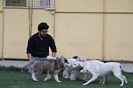 Puppy Group Classes by Chetna