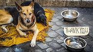 AWBI Guidelines In Interest Of Street Dog Care-Takers And Pet-Guardians