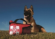 The Ultimate First Aid Kit For Your Pet, 6 Must Have Essentials