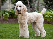 5 breeds make for excellent therapy dogs