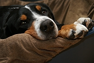 How To Take Care Of Your Dogs Paw
