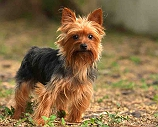 5 Dog Beautiful Breeds With Double Coats