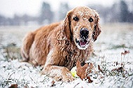 Winter Is Coming!! Here Are 7 Ways To Care For Your Dog!!