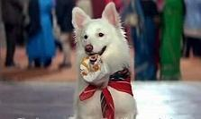 7 Bollywood movies where the dog plays a..