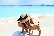 A Puppy Island That Lets You Cuddle Pupp..