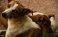 7 Things that a Stray Dog wants you to l..
