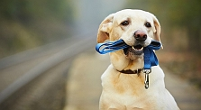 5 Lovely Lessons To Learn From Your Dog