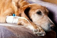 10 Indications Your Dog Can Be Suffering..