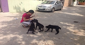 avnika-the-superwoman-for-38-stray-dogs