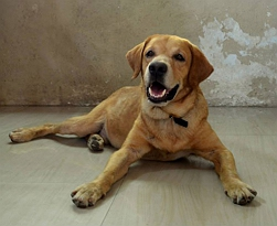 adoption-tails-all-you-need-is-love-kades-story