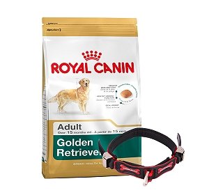 Royal Canin Golden Retriever Adult - 3 Kg With Ergocomfort Dog Collar Large-Red