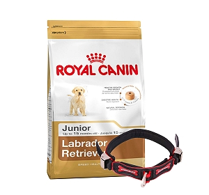 Royal Canin Labrador Junior - 3 Kg With Ergocomfort Dog Collar Small-Red