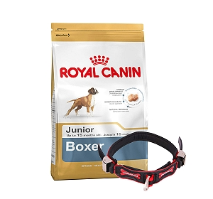 Royal Canin Boxer Junior - 3 Kg With Ergocomfort Dog Collar Small-Red