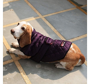Mutt Of Course Bomber Jacket Purple - Xlarge