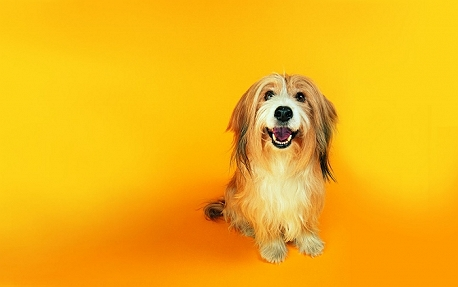 10 Things Your Dog would Tell You, if he coul..