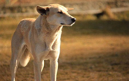 A Letter From The Heart Of A Stray Dog (Tear-..
