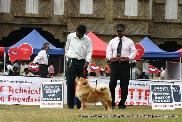 Best of Breed, BOB,Chow Chow,sw-12, image