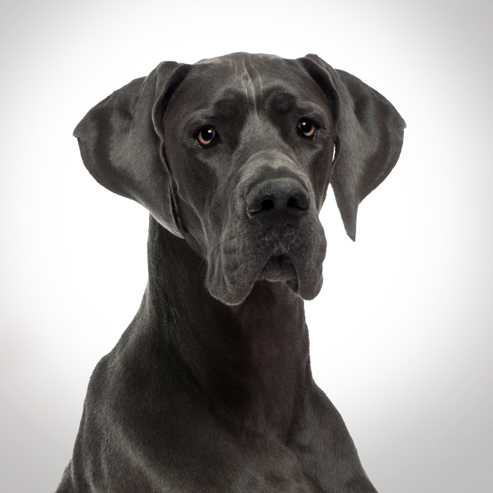 Captain Zack The Great Dane Groom Box - Non Veg