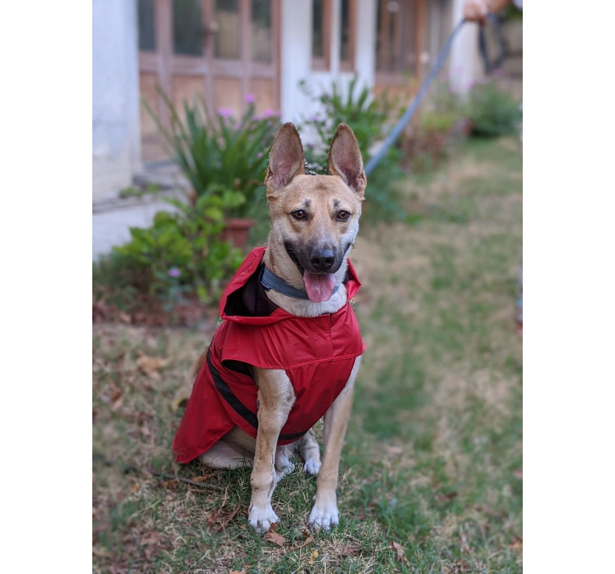 Mutt Of Course Dog Raincoat Red - Large