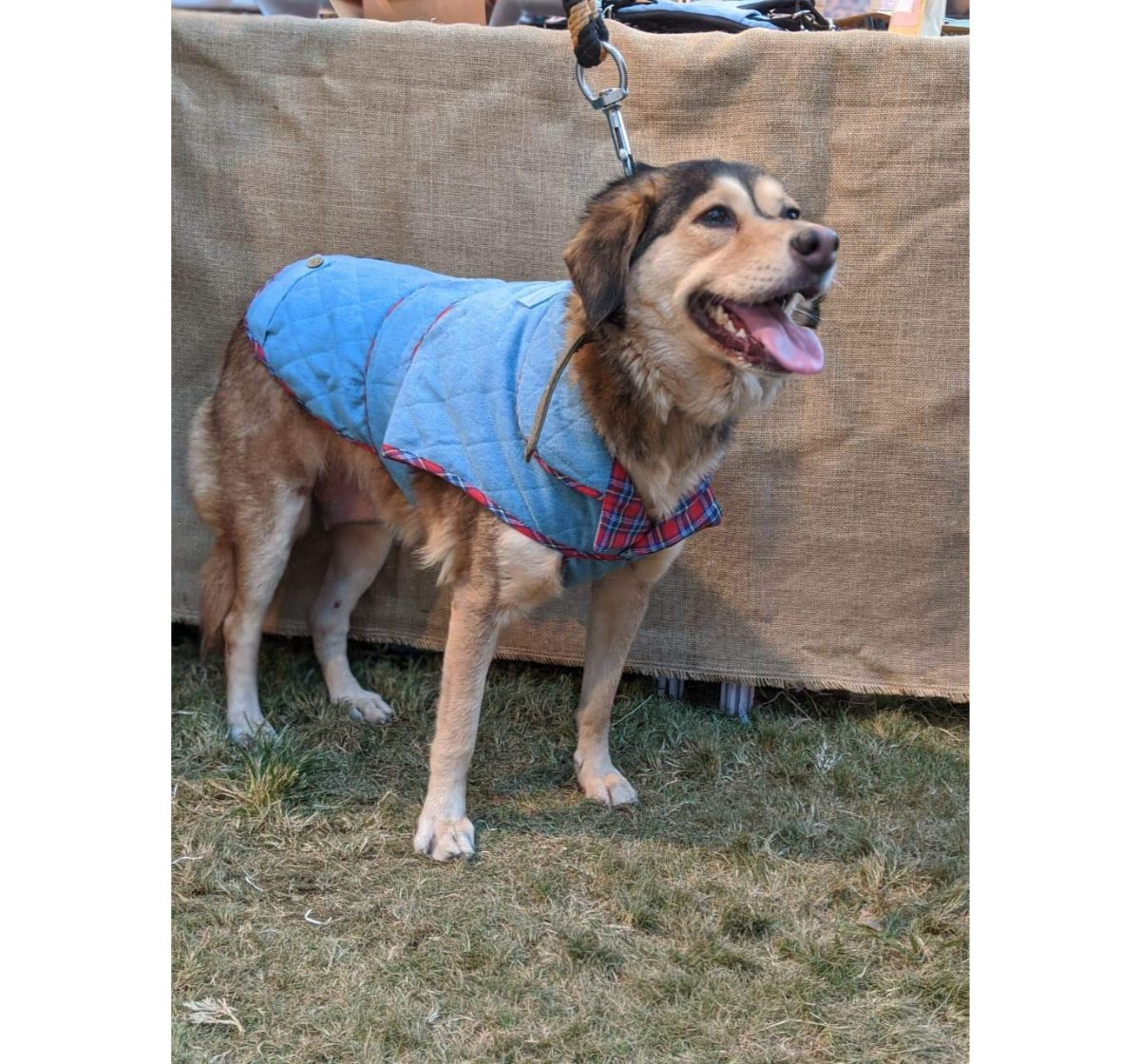 Mutt Of Course Denim Jacket Light Blue - Large